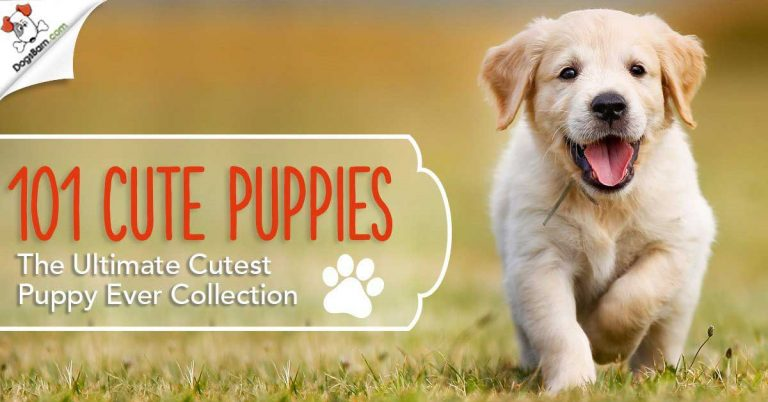 cute puppy breeds