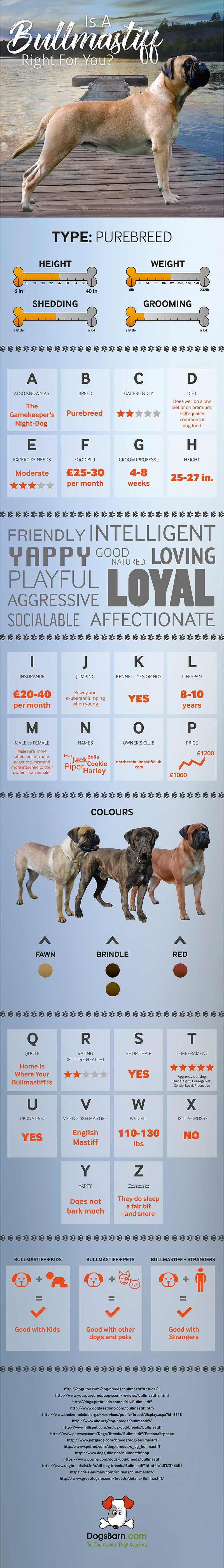 Bullmastiff Dog Breed Infographic
