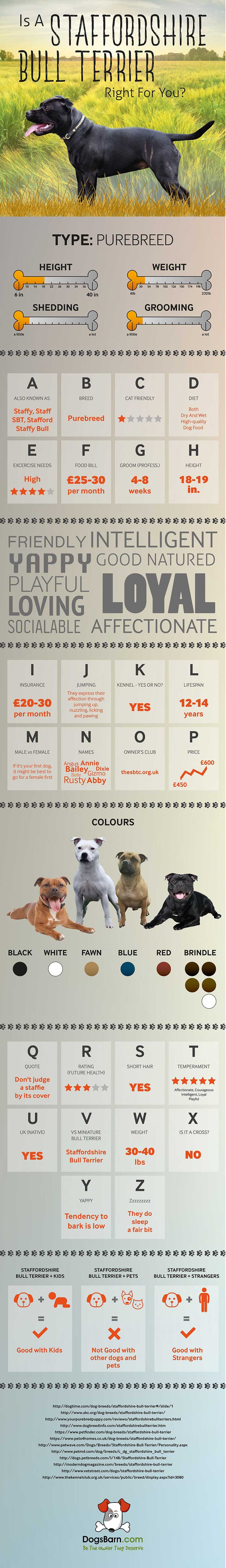 Staffordshire-Bull-Terrier-Dog-Breed-Infographic