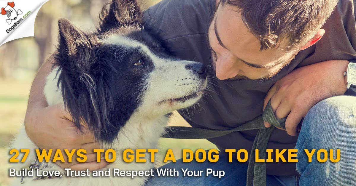 getting a dog to like you