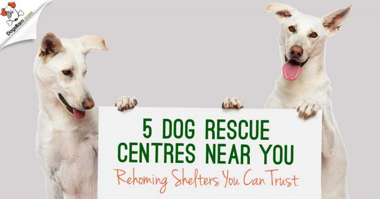 dog rescue centres near you