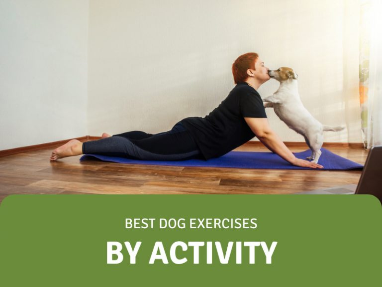 featured image for dog exercises by activity