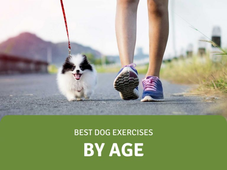 featured image for dog exercises by age