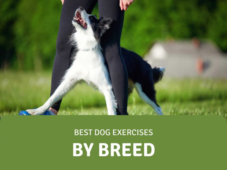 featured image for dog exercises by breed