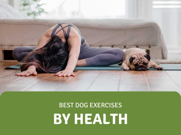 featured image for dog exercises by health