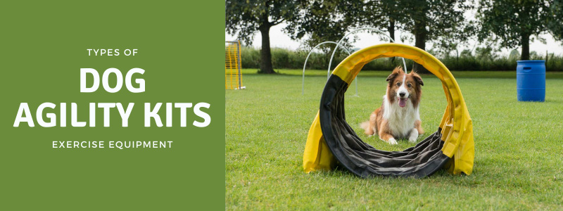 featured image for types of dog agility kits