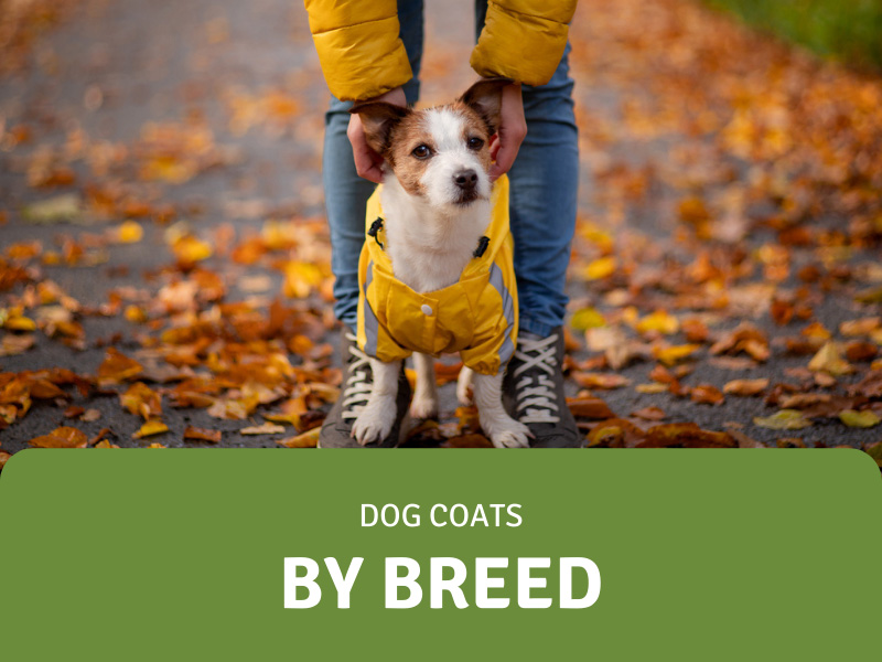 Featured Image for Best Dog Coats By Breed