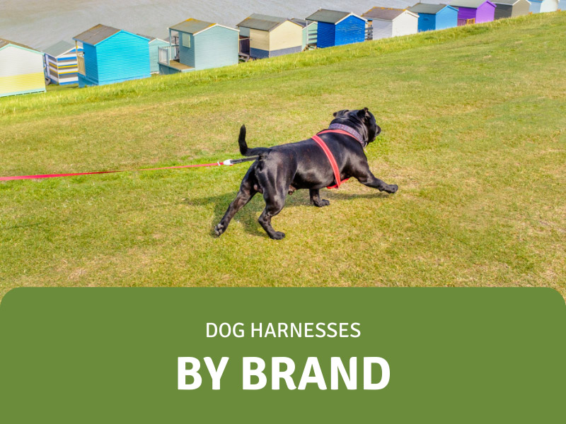 featured image for best dog harness brands