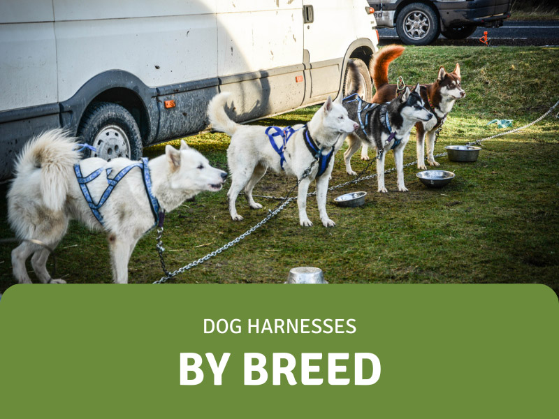 featured image for breed specific dog harnesses